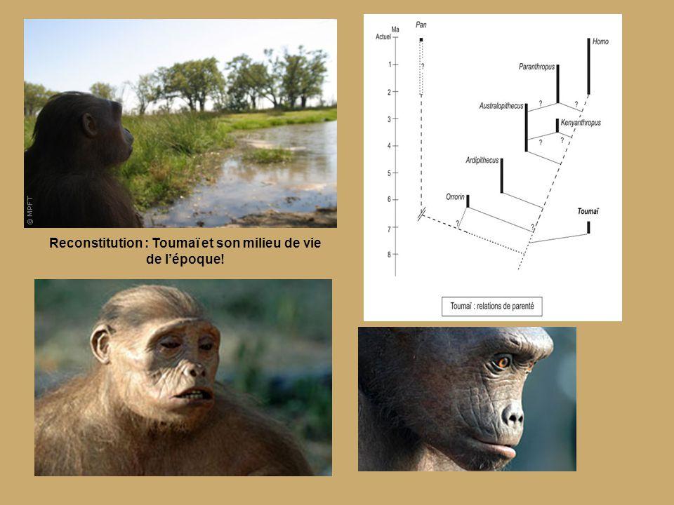 Australopithèque afarensis La petite Lucy.
