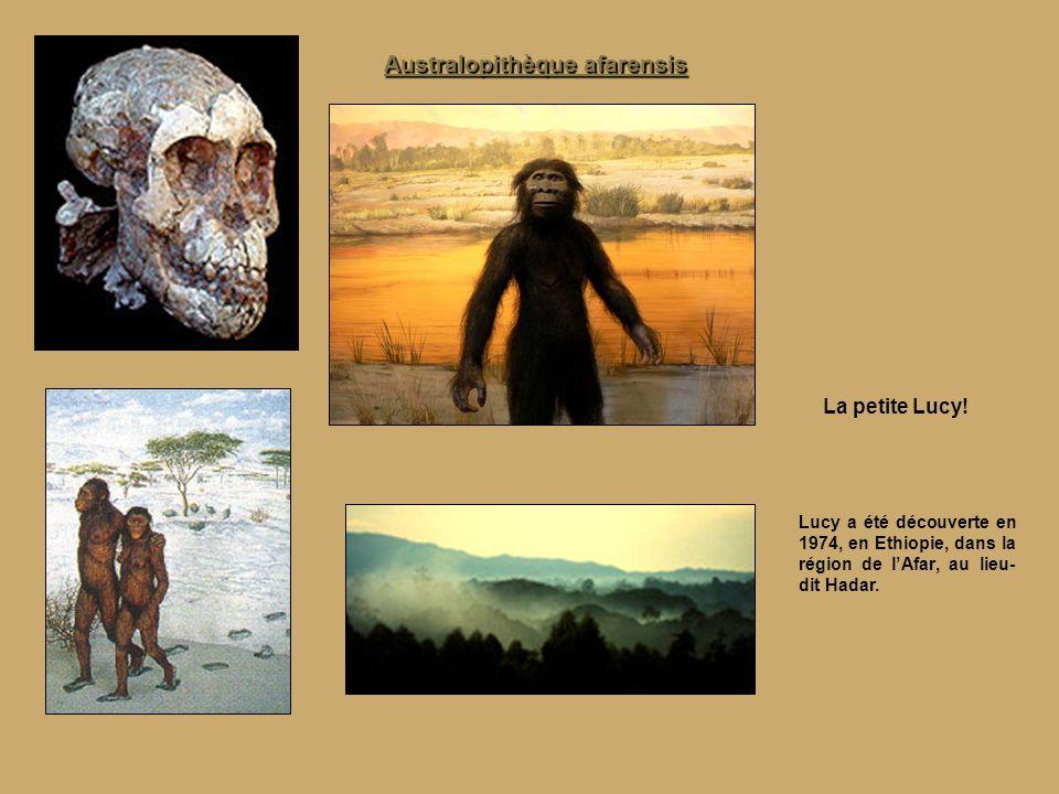 Lucy nous a laissé le squelette d'Australopithèque le plus complet jamais décrit.