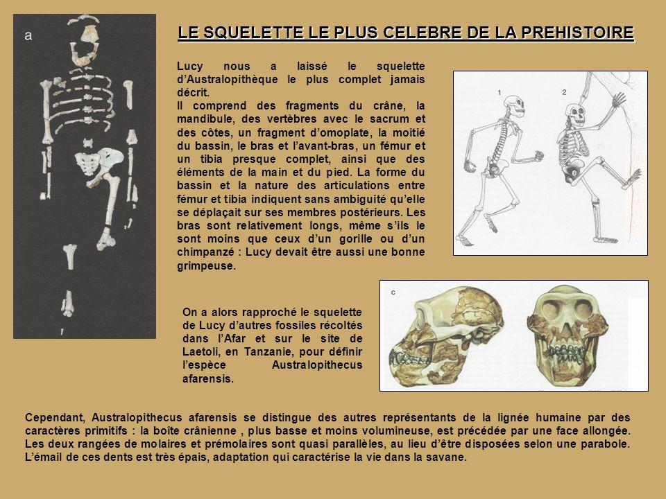 Celui là vous le connaissez bien, c est vous .Depuis 120 000 ans Homo Sapiens a bien sur évolué.