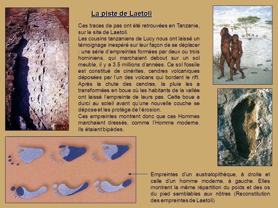 La piste de Laetoli Ces traces de pas ont été retrouvées en Tanzanie, sur le site de Laetoli.