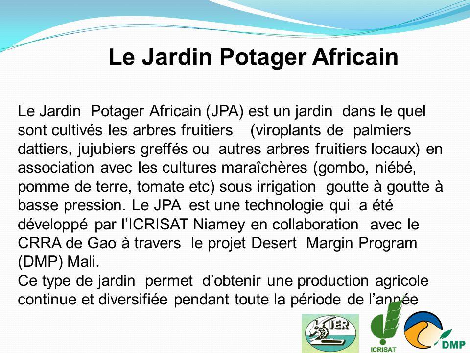 Le Jardin Potager Africain (JPA) est un jardin dans le quel sont cultivés les arbres fruitiers (viroplants de palmiers dattiers, jujubiers greffés ou