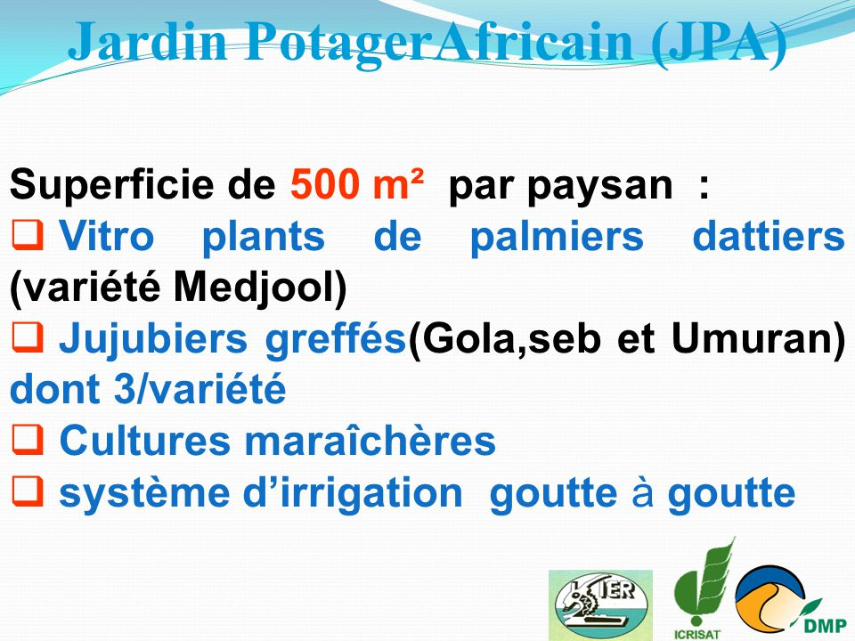 Jardin PotagerAfricain (JPA) Superficie de 500 m² par paysan :  Vitro plants de palmiers dattiers (variété Medjool)  Jujubiers greffés(Gola,seb et U