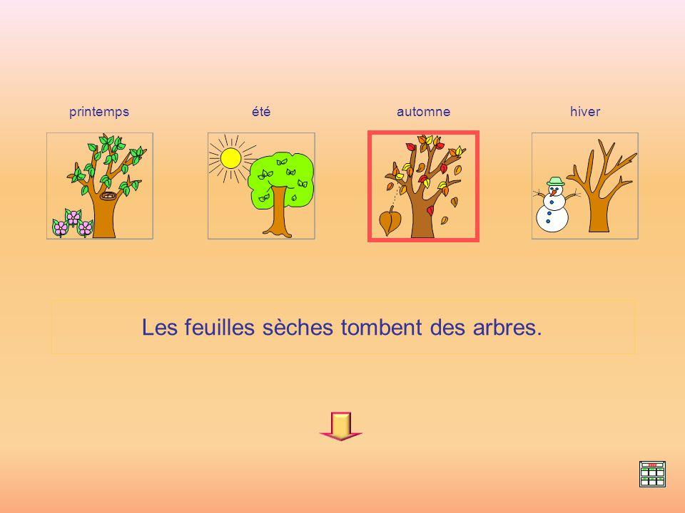 Les feuilles sèches tombent des arbres. hiverprintempsétéautomne