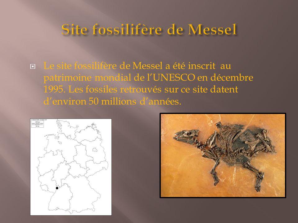  Le site fossilifère de Messel a été inscrit au patrimoine mondial de l'UNESCO en décembre 1995. Les fossiles retrouvés sur ce site datent d'environ