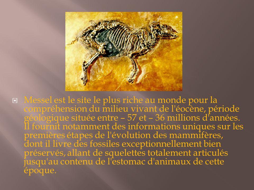  Messel est le site le plus riche au monde pour la compréhension du milieu vivant de l éocène, période géologique située entre – 57 et – 36 millions d années.