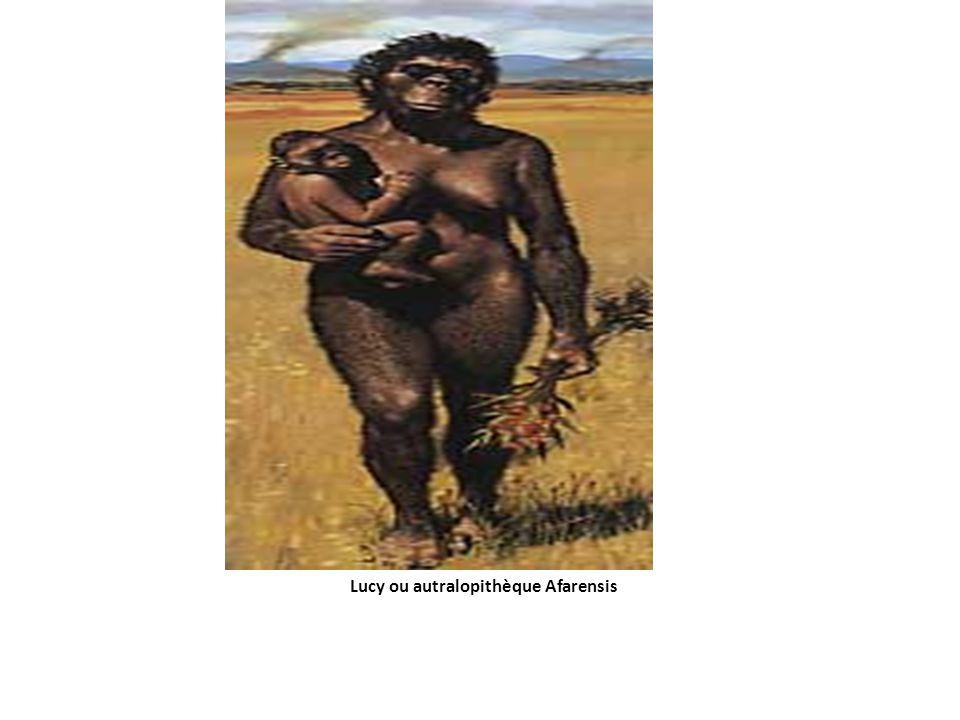 Lucy ou autralopithèque Afarensis