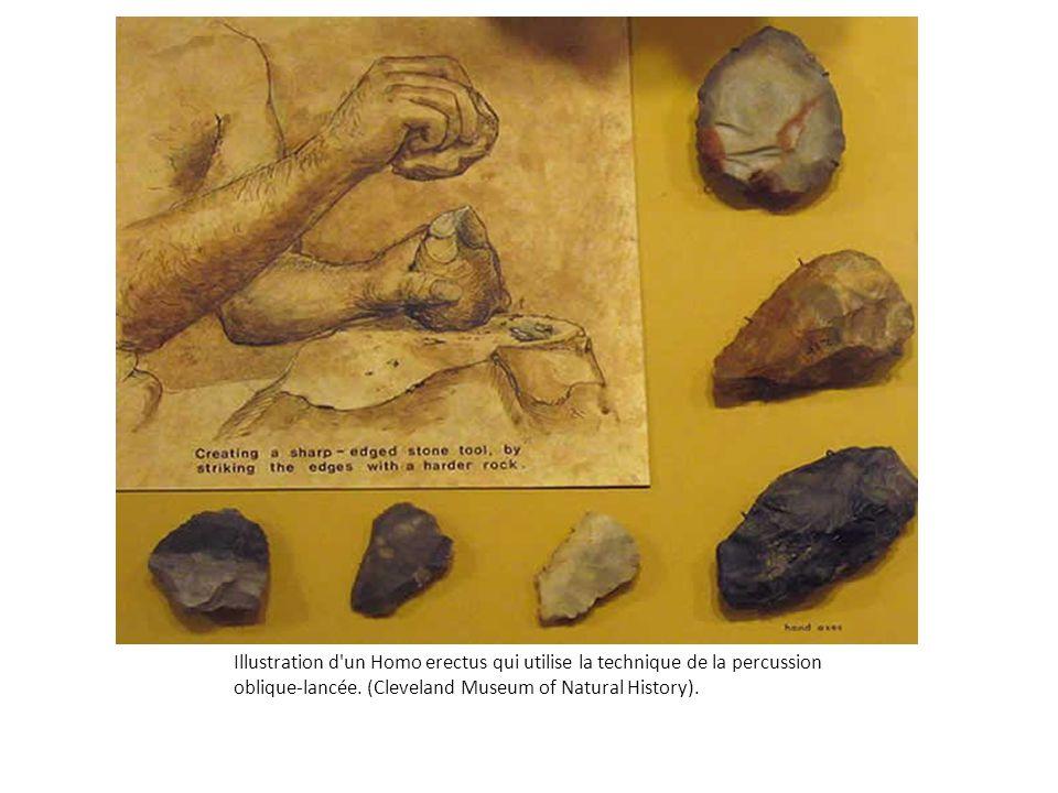 Illustration d'un Homo erectus qui utilise la technique de la percussion oblique-lancée. (Cleveland Museum of Natural History).
