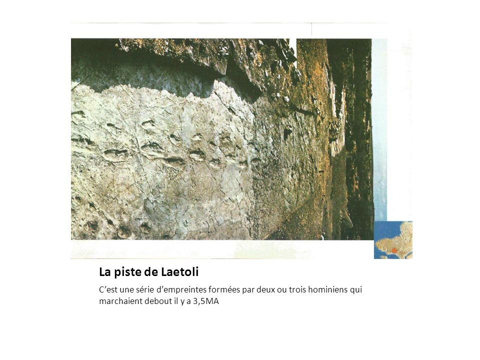 La piste de Laetoli C'est une série d'empreintes formées par deux ou trois hominiens qui marchaient debout il y a 3,5MA