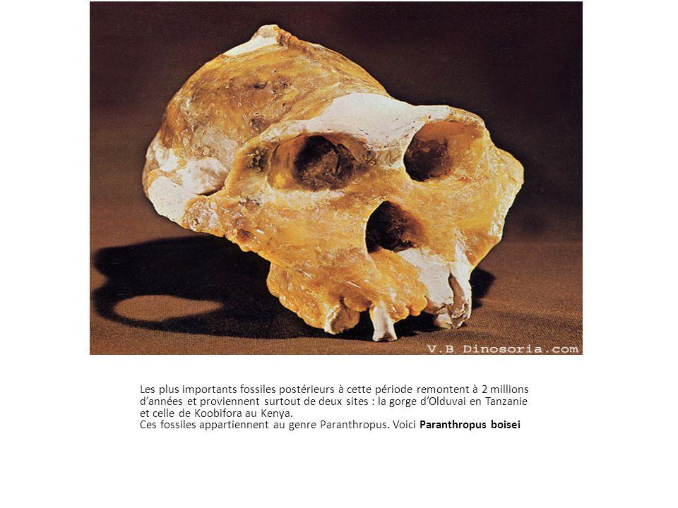 Les plus importants fossiles postérieurs à cette période remontent à 2 millions d'années et proviennent surtout de deux sites : la gorge d'Olduvai en