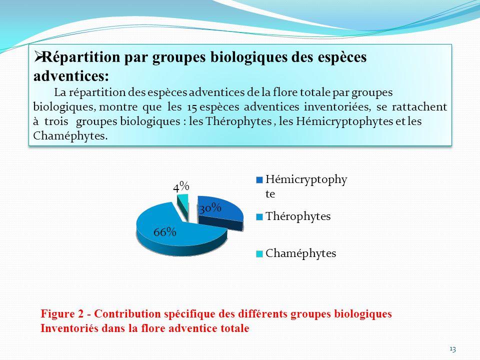 Répartition par groupes biologiques des espèces adventices: La répartition des espèces adventices de la flore totale par groupes biologiques, montre que les 15 espèces adventices inventoriées, se rattachent à trois groupes biologiques : les Thérophytes, les Hémicryptophytes et les Chaméphytes.
