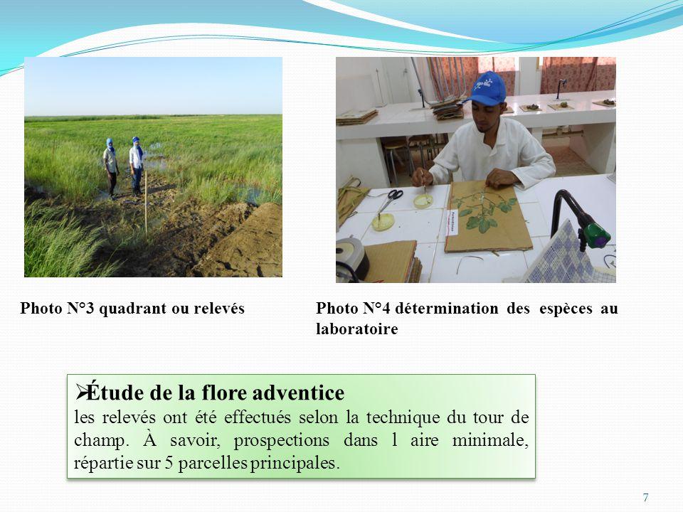 7 Photo N°4 détermination des espèces au laboratoire Photo N°3 quadrant ou relevés  Étude de la flore adventice les relevés ont été effectués selon la technique du tour de champ.