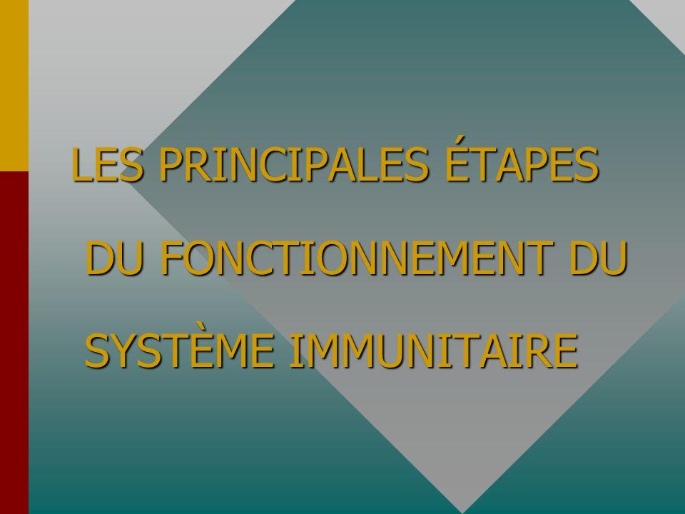 LES PRINCIPALES ÉTAPES DU FONCTIONNEMENT DU SYSTÈME IMMUNITAIRE
