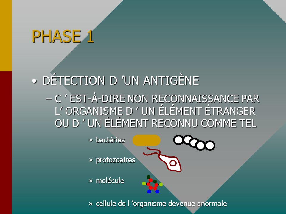 DÉTECTION D 'UN ANTIGÈNEDÉTECTION D 'UN ANTIGÈNE –C ' EST-À-DIRE NON RECONNAISSANCE PAR L' ORGANISME D ' UN ÉLÉMENT ÉTRANGER OU D ' UN ÉLÉMENT RECONNU COMME TEL »bactéries »protozoaires »molécule »cellule de l 'organisme devenue anormale PHASE 1