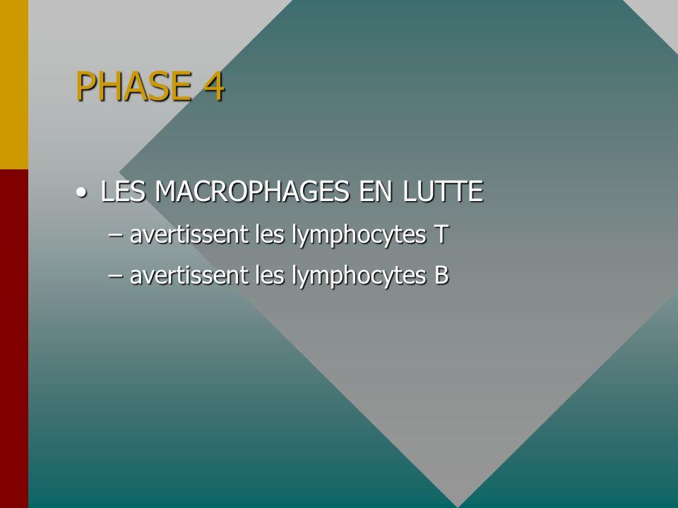 PHASE 4 LES MACROPHAGES EN LUTTELES MACROPHAGES EN LUTTE –avertissent les lymphocytes T –avertissent les lymphocytes B