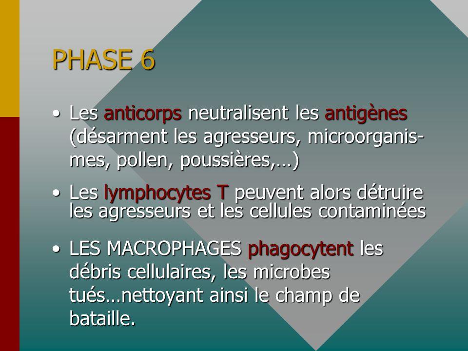 PHASE 6 Les anticorps neutralisent les antigènes (désarment les agresseurs, microorganis- mes, pollen, poussières,…)Les anticorps neutralisent les antigènes (désarment les agresseurs, microorganis- mes, pollen, poussières,…) Les lymphocytes T peuvent alors détruire les agresseurs et les cellules contaminéesLes lymphocytes T peuvent alors détruire les agresseurs et les cellules contaminées LES MACROPHAGES phagocytent les débris cellulaires, les microbes tués…nettoyant ainsi le champ de bataille.LES MACROPHAGES phagocytent les débris cellulaires, les microbes tués…nettoyant ainsi le champ de bataille.