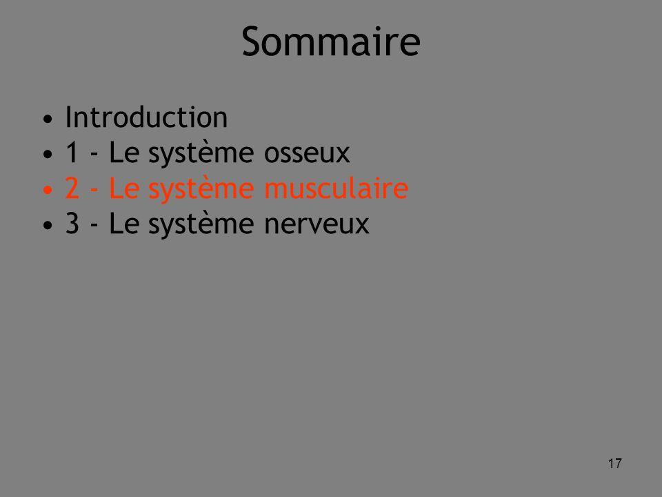 17 Sommaire Introduction 1 - Le système osseux 2 - Le système musculaire 3 - Le système nerveux