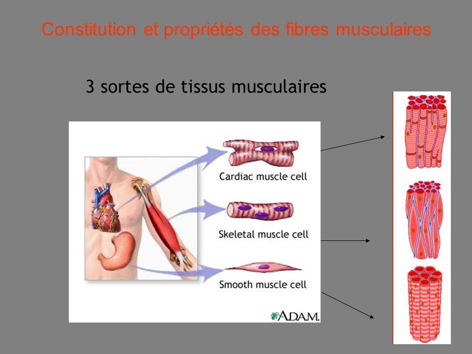 19 3 sortes de tissus musculaires -Le muscle strié cardiaque -Les muscles lisses -Les muscles squelettiques Constitution et propriétés des fibres musculaires