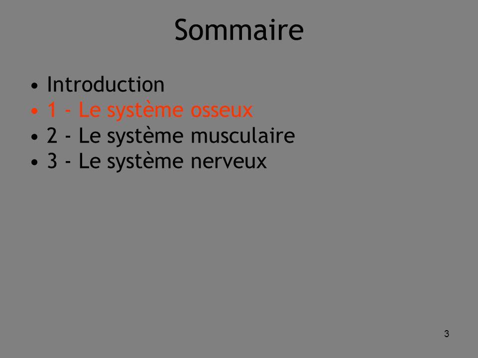 3 Sommaire Introduction 1 - Le système osseux 2 - Le système musculaire 3 - Le système nerveux