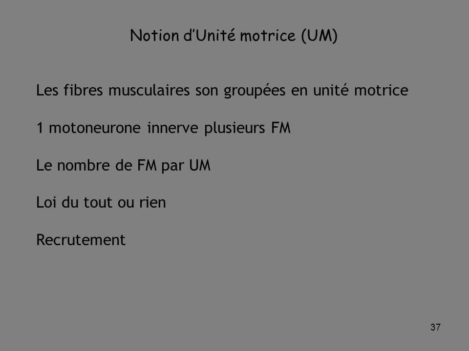37 Notion d'Unité motrice (UM) Les fibres musculaires son groupées en unité motrice 1 motoneurone innerve plusieurs FM Le nombre de FM par UM Loi du tout ou rien Recrutement
