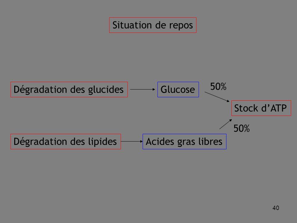 40 Situation de repos Dégradation des glucides Dégradation des lipides Glucose Acides gras libres 50% Stock d'ATP