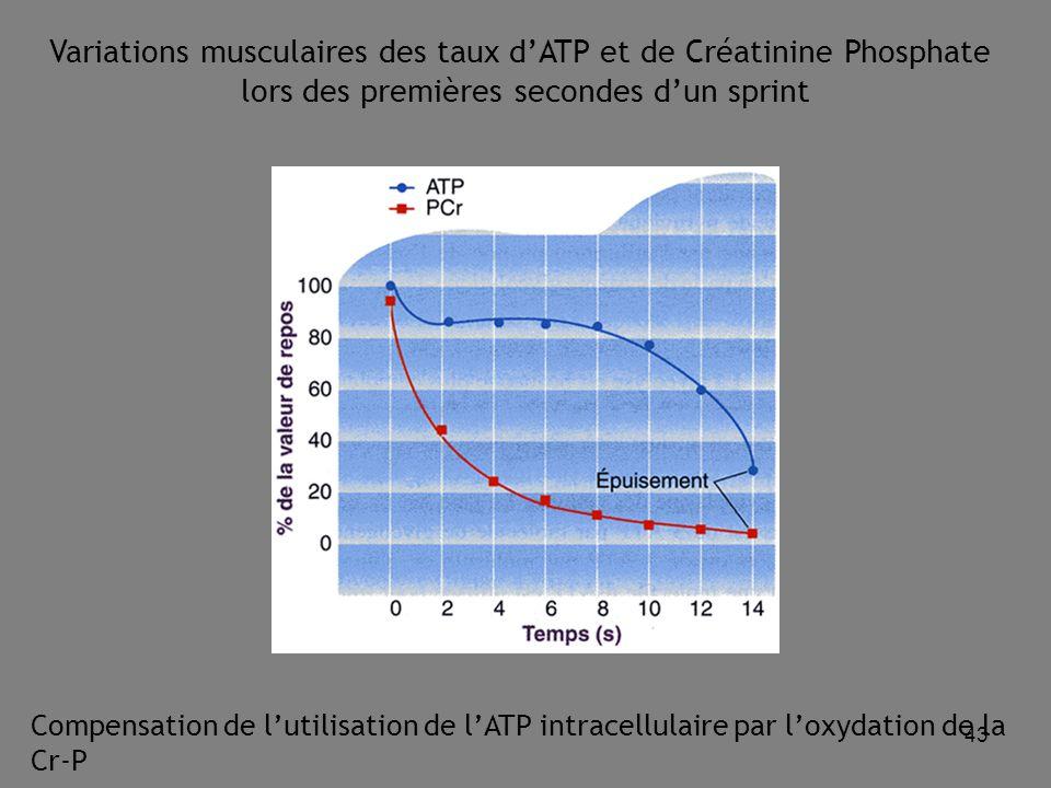 43 Variations musculaires des taux d'ATP et de Créatinine Phosphate lors des premières secondes d'un sprint Compensation de l'utilisation de l'ATP intracellulaire par l'oxydation de la Cr-P