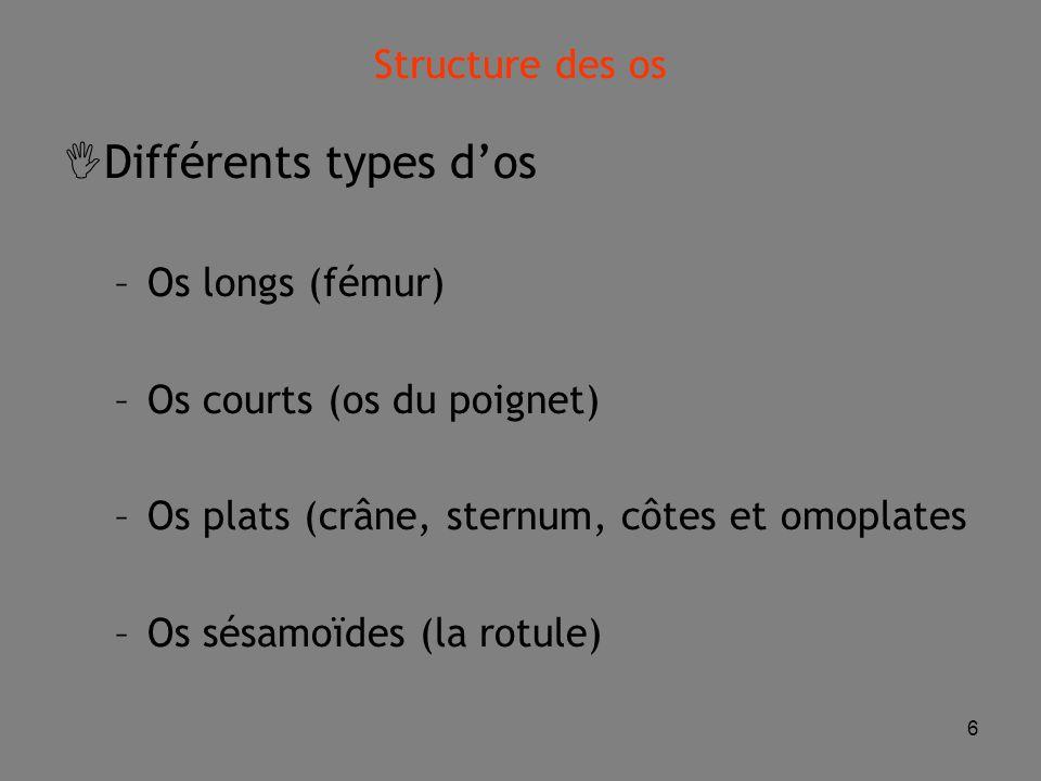6  Différents types d'os –Os longs (fémur) –Os courts (os du poignet) –Os plats (crâne, sternum, côtes et omoplates –Os sésamoïdes (la rotule) Structure des os