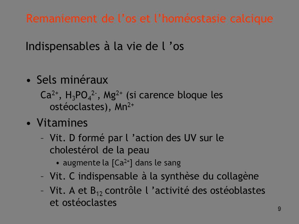 9 Indispensables à la vie de l 'os Sels minéraux Ca 2+, H 3 PO 4 2-, Mg 2+ (si carence bloque les ostéoclastes), Mn 2+ Vitamines –Vit.