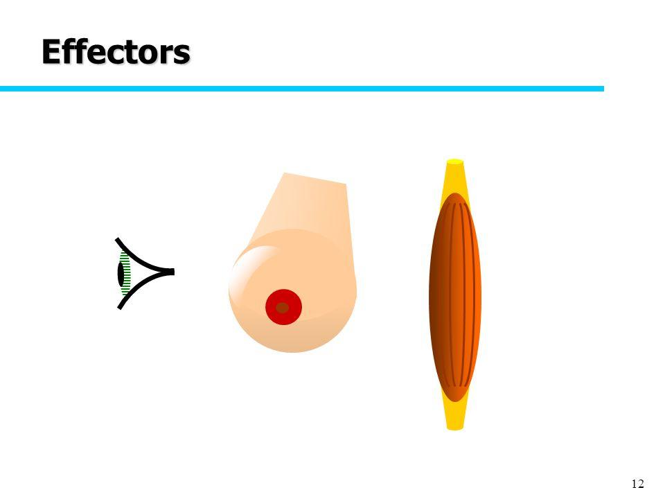 12 Effectors
