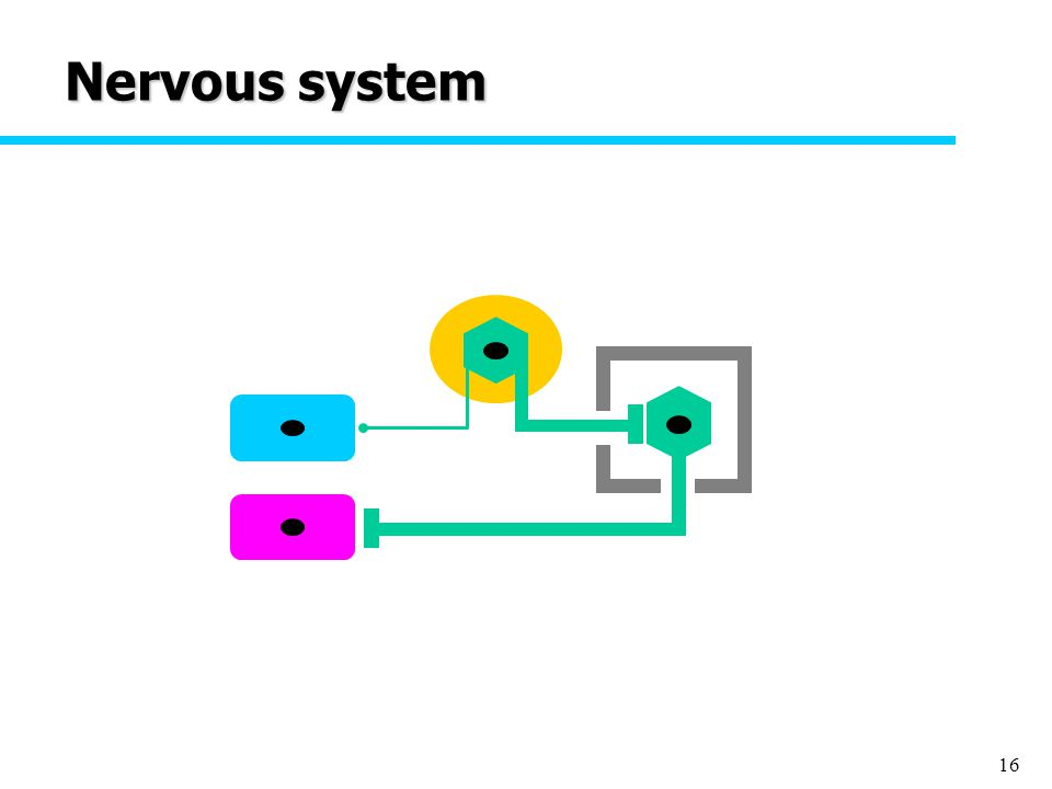 16 Nervous system