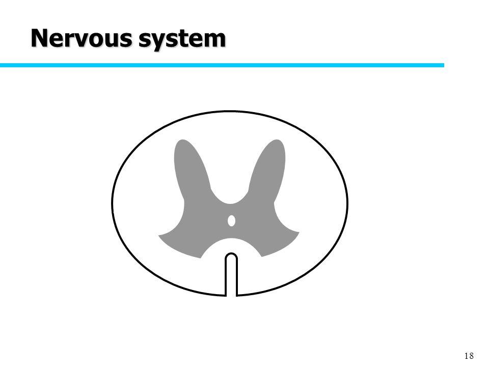 18 Nervous system