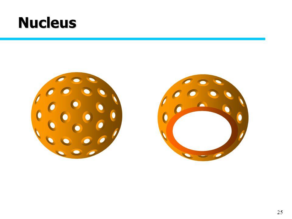 25 Nucleus