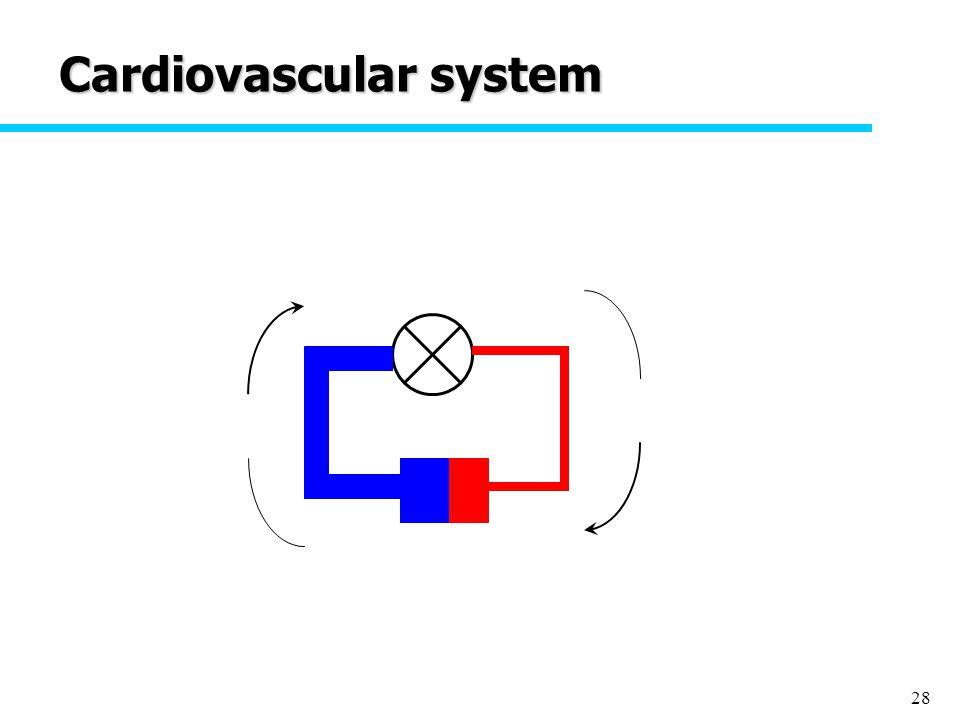 28 Cardiovascular system