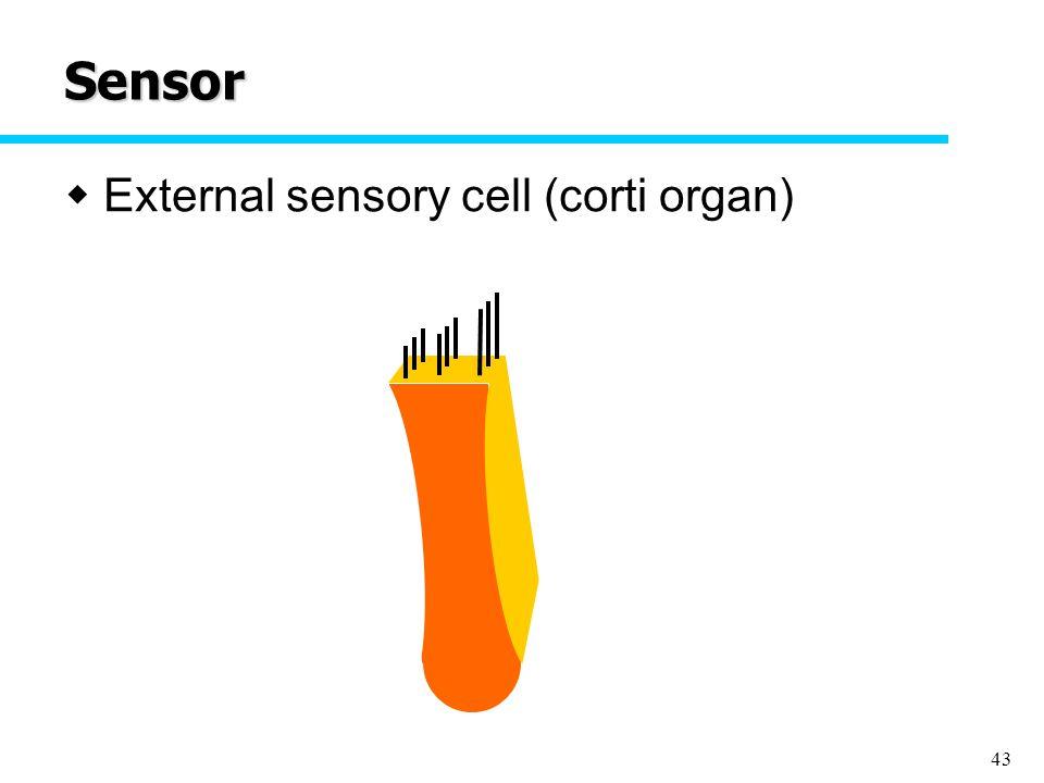 43 Sensor  External sensory cell (corti organ)