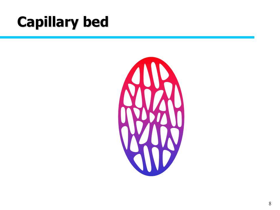 8 Capillary bed