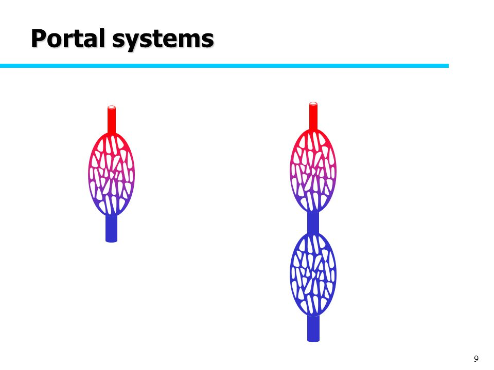 9 Portal systems