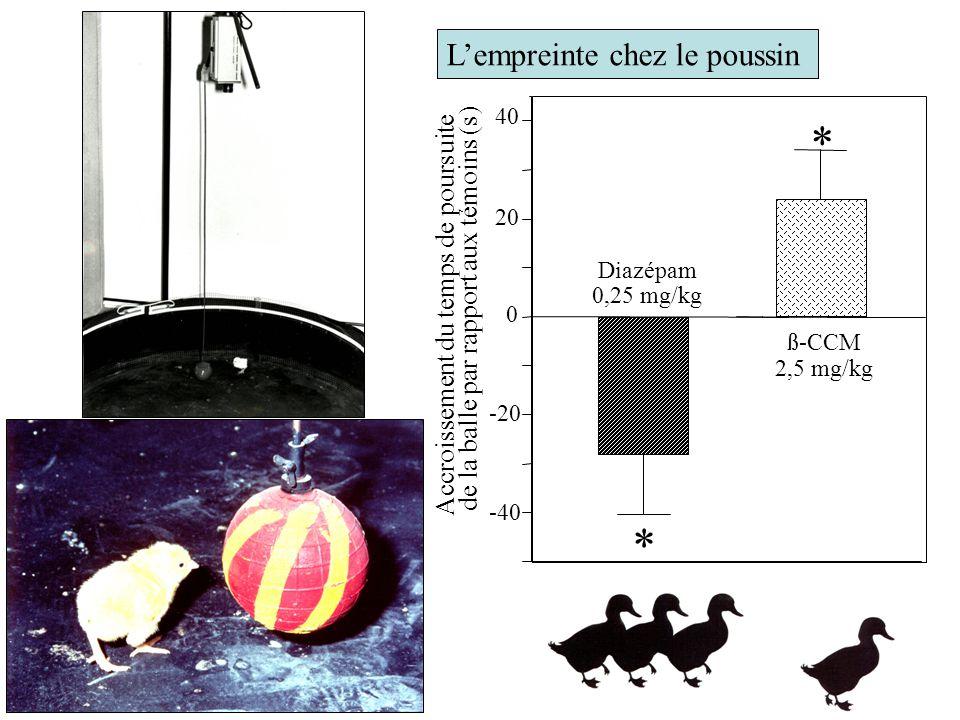 L'empreinte chez le poussin -40 -20 0 20 40 Accroissement du temps de poursuite de la balle par rapport aux témoins (s) Diazépam 0,25 mg/kg ß-CCM 2,5 mg/kg * *