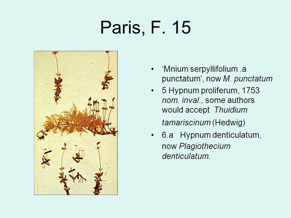 Paris, F. 15 'Mnium serpyllifolium.a punctatum', now M.