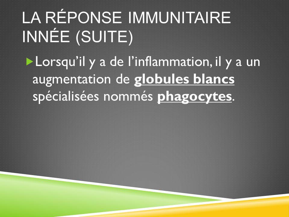 LA RÉPONSE IMMUNITAIRE INNÉE (SUITE)  Lorsqu'il y a de l'inflammation, il y a un augmentation de globules blancs spécialisées nommés phagocytes.