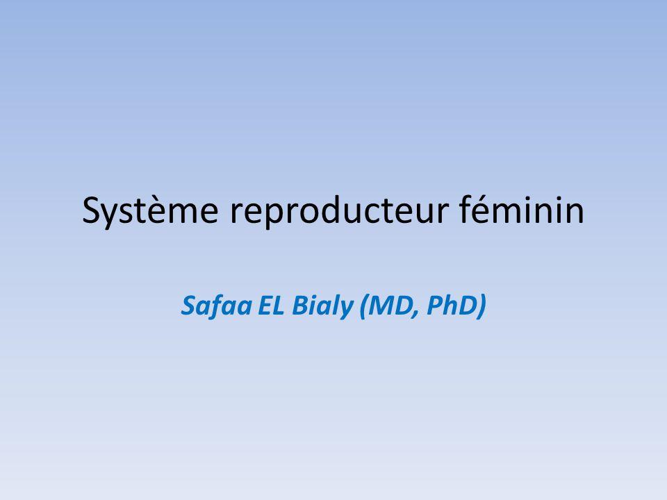 Système reproducteur féminin Safaa EL Bialy (MD, PhD)