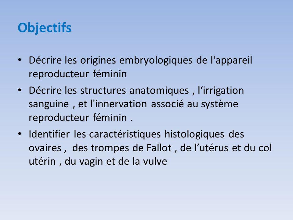 Objectifs Décrire les origines embryologiques de l'appareil reproducteur féminin Décrire les structures anatomiques, l'irrigation sanguine, et l'inner