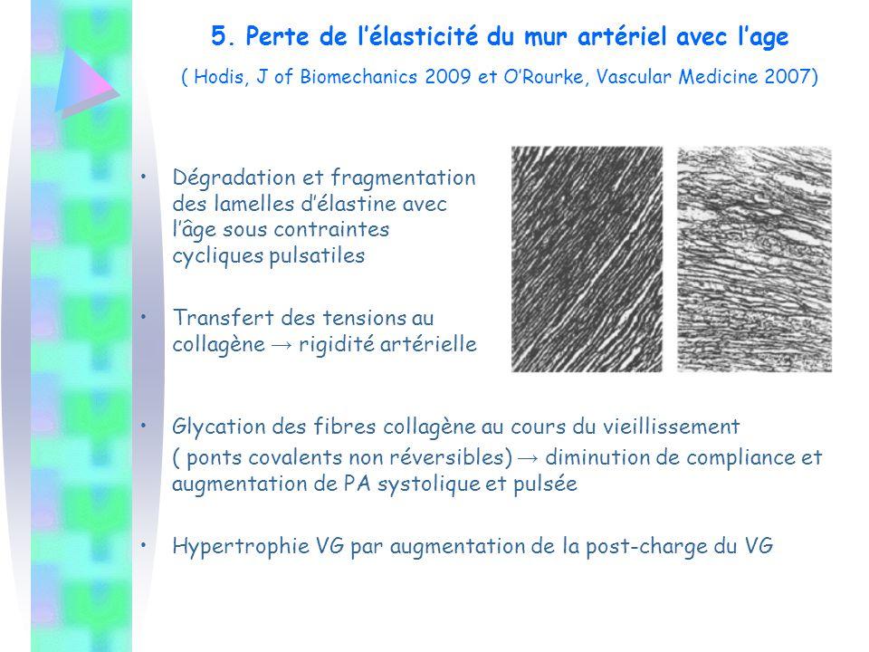 5. Perte de l'élasticité du mur artériel avec l'age ( Hodis, J of Biomechanics 2009 et O'Rourke, Vascular Medicine 2007) Dégradation et fragmentation