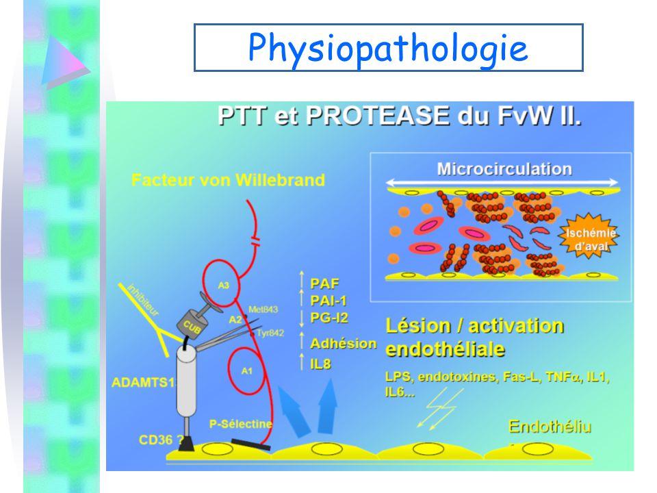 Microcirculation normale Conditions physiques dans la microcirculation Microcirculation dans le PTT 90-180 dyn/cm 2 20-50 500 l /sec 200 km/h Hauteur: 140 m 41,5 dyn/cm 2