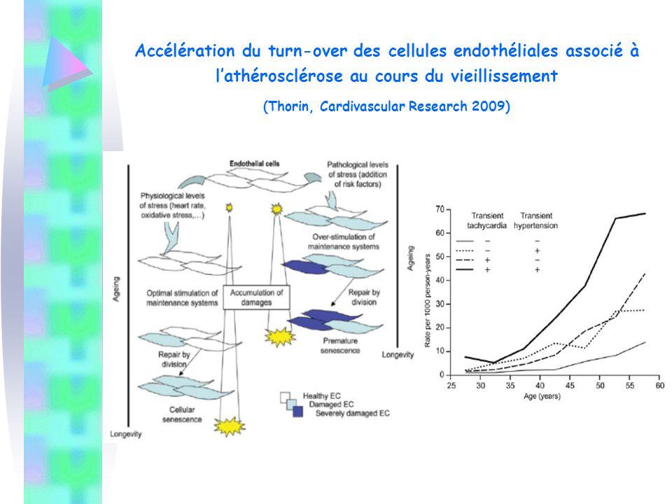 Induite par l'acétylcholine par inactivation du NO / radicaux libres Diminution vasodilatation endothélium-dépendant Inhibition de relaxation / L-NAME 2.