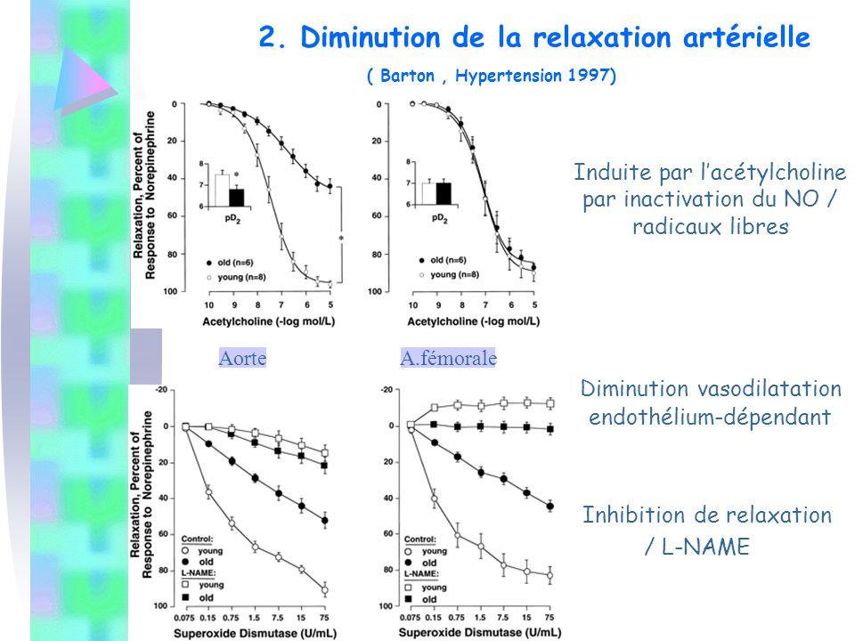 Induite par l'acétylcholine par inactivation du NO / radicaux libres Diminution vasodilatation endothélium-dépendant Inhibition de relaxation / L-NAME