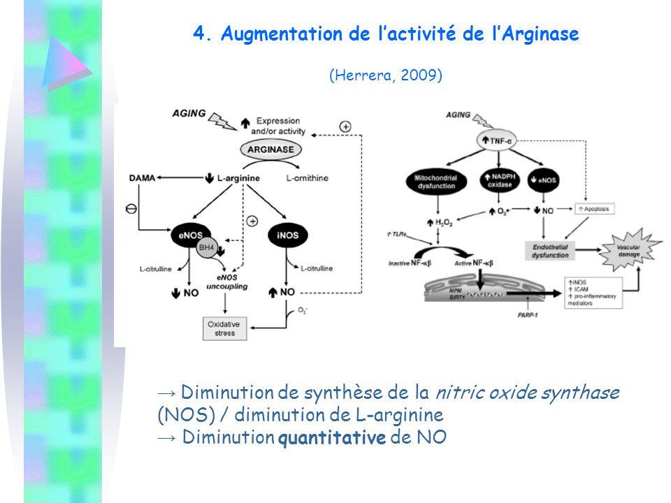 4. Augmentation de l'activité de l'Arginase (Herrera, 2009) → Diminution de synthèse de la nitric oxide synthase (NOS) / diminution de L-arginine → Di
