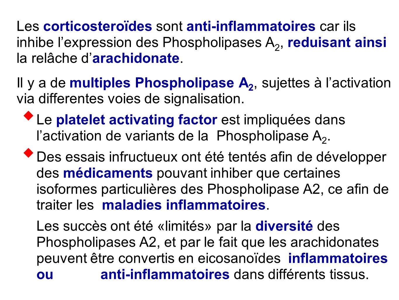 Les corticosteroïdes sont anti-inflammatoires car ils inhibe l'expression des Phospholipases A 2, reduisant ainsi la relâche d'arachidonate. Il y a de