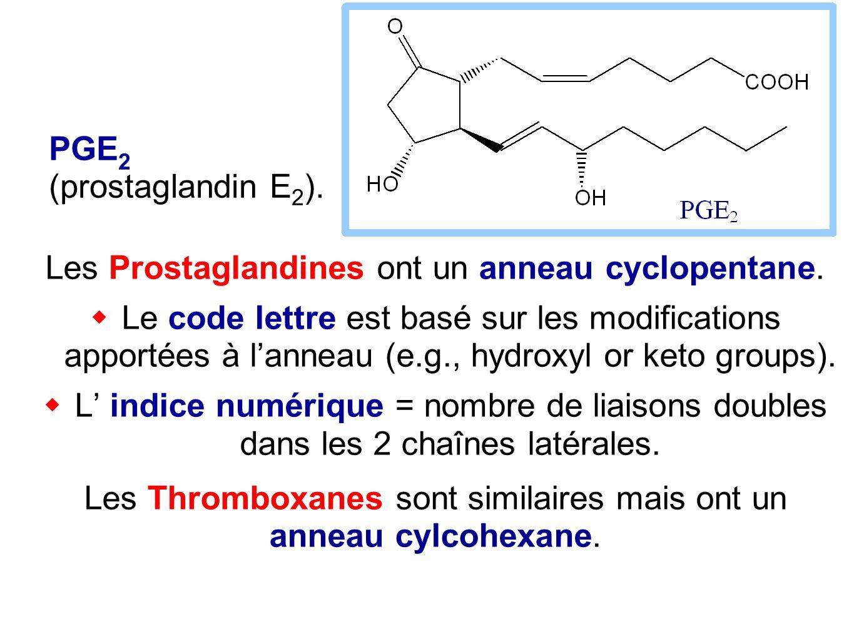 PGE 2 (prostaglandin E 2 ). Les Prostaglandines ont un anneau cyclopentane.  Le code lettre est basé sur les modifications apportées à l'anneau (e.g.