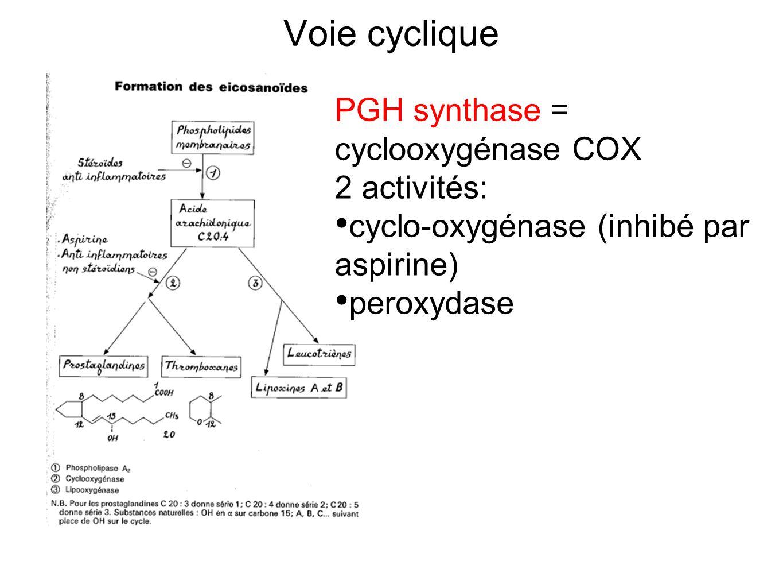 Voie cyclique PGH synthase = cyclooxygénase COX 2 activités: cyclo-oxygénase (inhibé par aspirine) peroxydase
