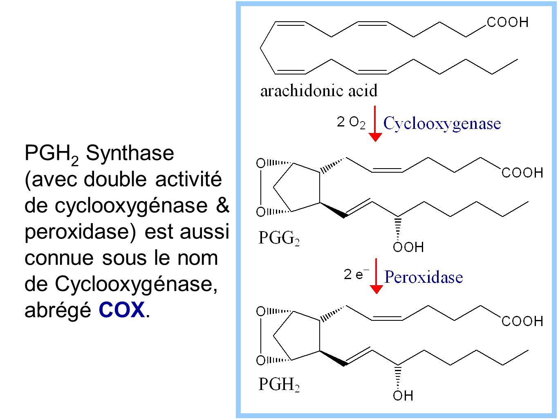PGH 2 Synthase (avec double activité de cyclooxygénase & peroxidase) est aussi connue sous le nom de Cyclooxygénase, abrégé COX.