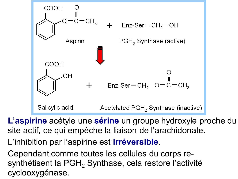 L'aspirine acétyle une sérine un groupe hydroxyle proche du site actif, ce qui empêche la liaison de l'arachidonate. L'inhibition par l'aspirine est i